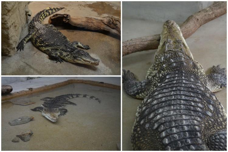 zoo de pont scorff morbihan (9)